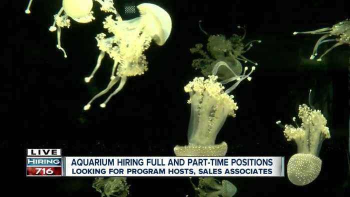 Aquarium of Niagara looking to fill 20 positions ASAP