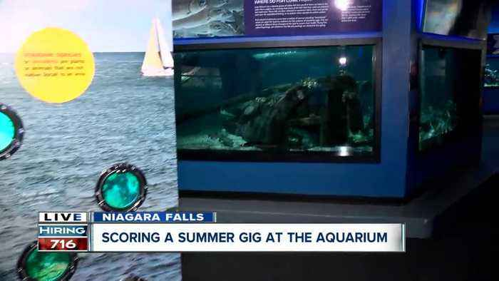Have 1500 different animals as your co-workers at Aquarium of Niagara