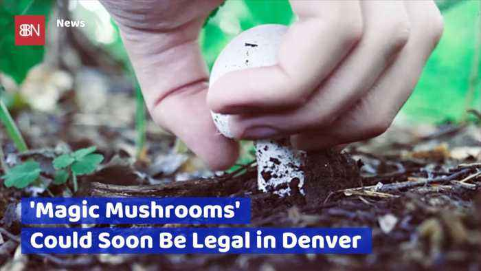 Will Magic Mushrooms Be Legal In Colorado