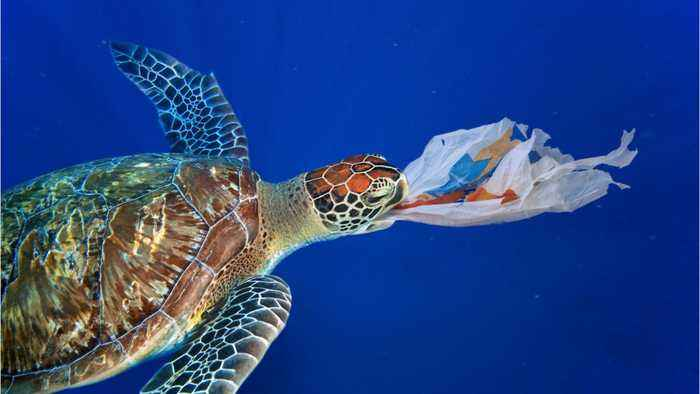 187 Countries Agreed To Do Something About Plastic Waste--Except The United States
