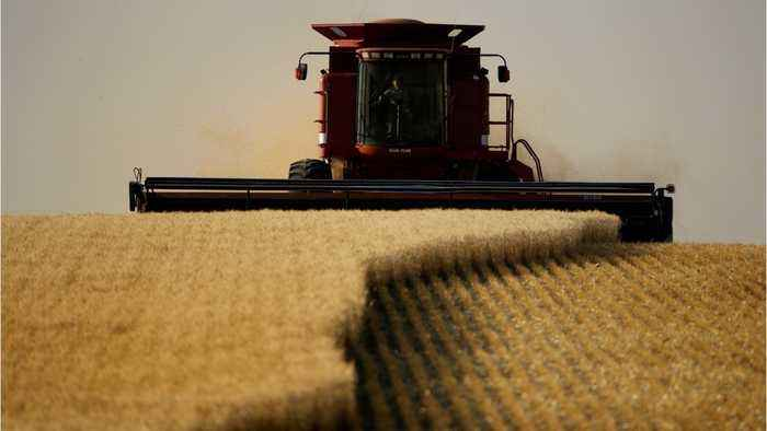 U.S. to create a new plan to help farmers cope with ongoing U.S.-China trade war