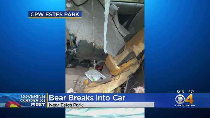 Wildlife Officers Show Damage From Bear Trapped Inside Car