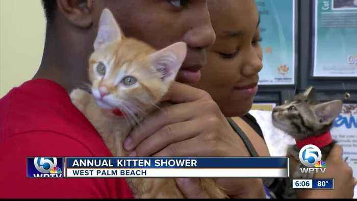 Annual kitten shower held at Peggy Adams Animal Rescue League