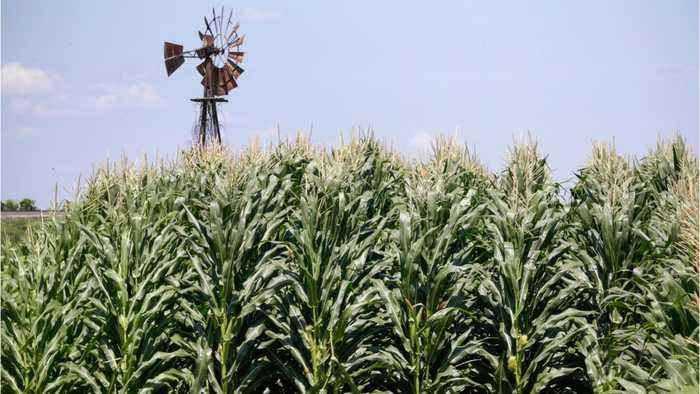 New Trump Aid Plan For U.S. Farmers to Rely On Direct Payments