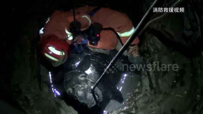 'Hee-haul him out!' Firefighters rescue 350kg donkey trapped in well