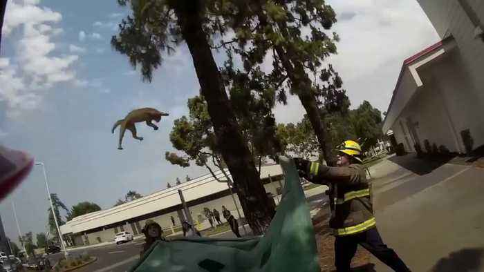 Fire fighters save cat stuck up extremely high tree