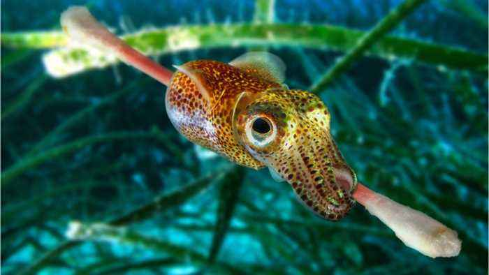 Why Squid Are The Super Geniuses Of The Sea