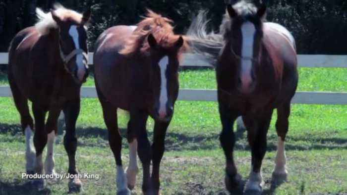Horse Owner Gets No Jail Time For Over 30 Counts of Animal Cruelty