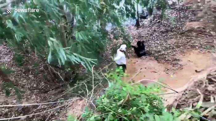 Terrified calf rescued after falling into pond while fleeing noise of chainsaw