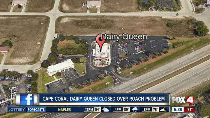Live roaches found at Cape Coral Dairy Queen