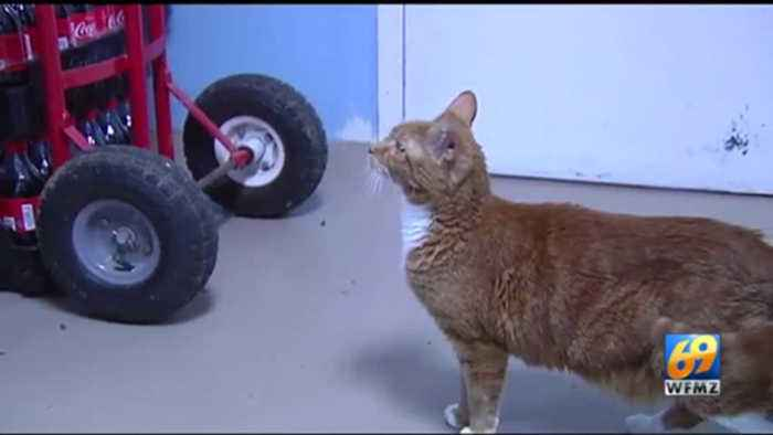 VIDEO This week's Furry Friends come from Center for Animal Health and Welfare