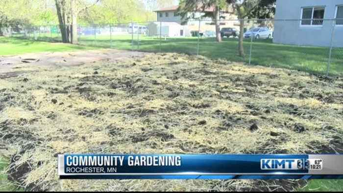 Community gardens in Rochester