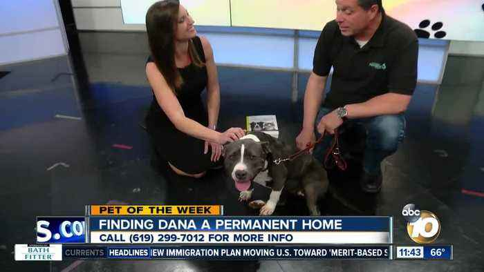 10News Pet of the Week: Dana
