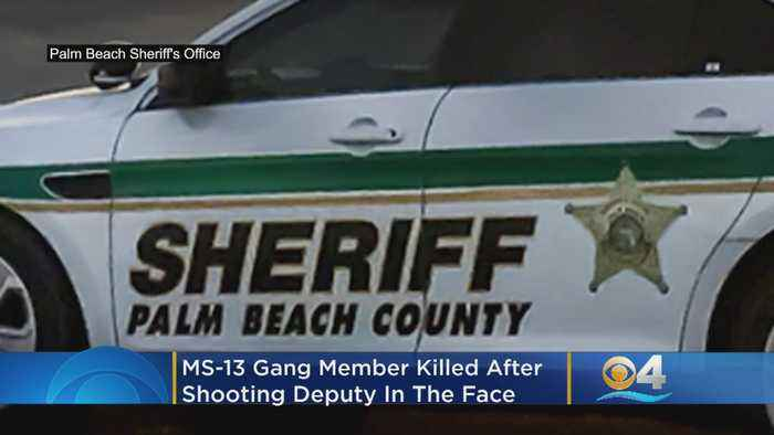MS-13 Gang Member Killed After Shooting Deputy In The Face