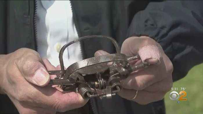 Hunting Traps Found In Long Island Community