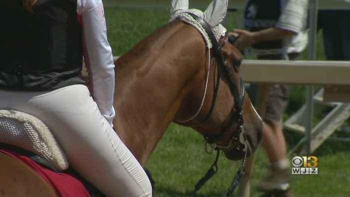 Horse Racing Fans Buzzing With Excitement Ahead Of Preakness Stakes