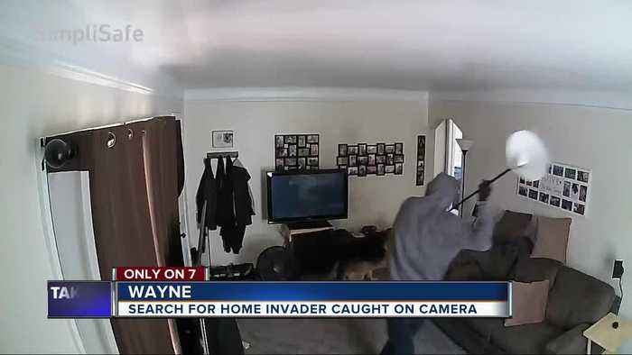 Caught on camera: German Shepherd confronts burglar inside of home