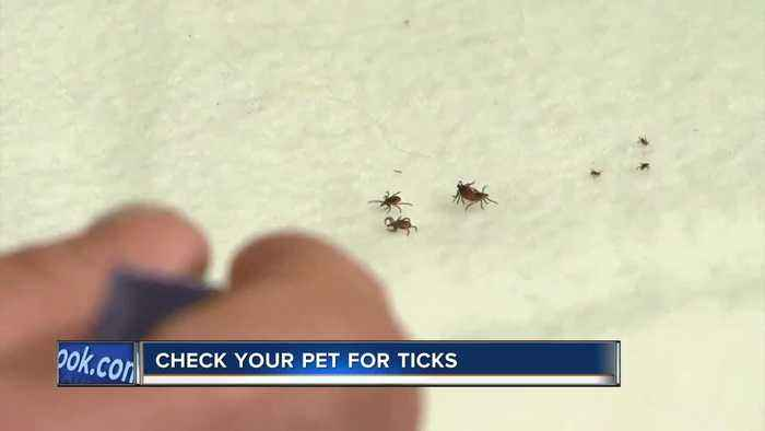Warmer weather is here, and so are ticks