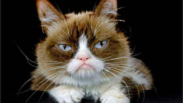 Viral Meme Sensation Grumpy Cat Is Dead