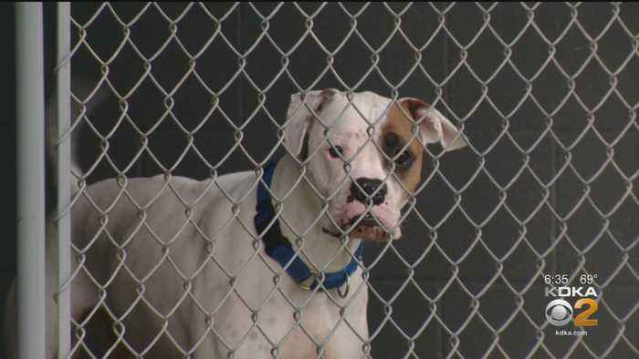 Two Separate Viruses Cause Washington County Humane Society To Close To The Public