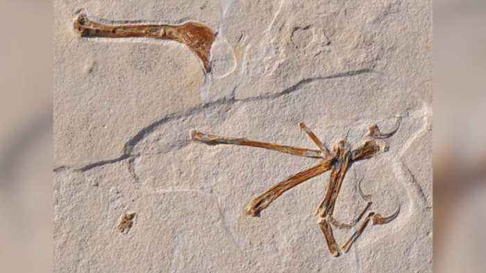 A New Bird-Like Dinosaur Has Been Discovered