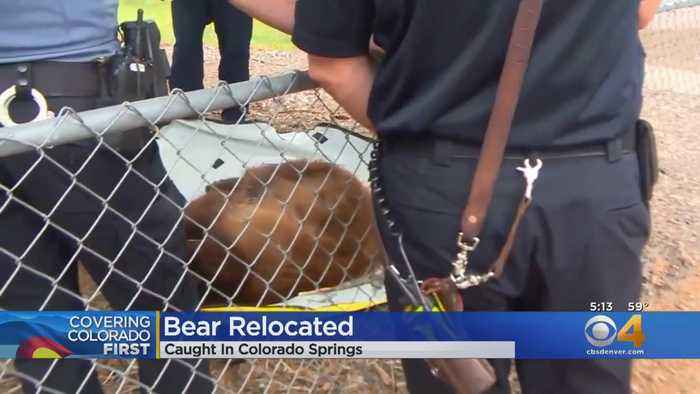 Bear Released Back Into Wild
