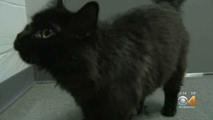 Cat To Return Home After Road Trip To Topeka