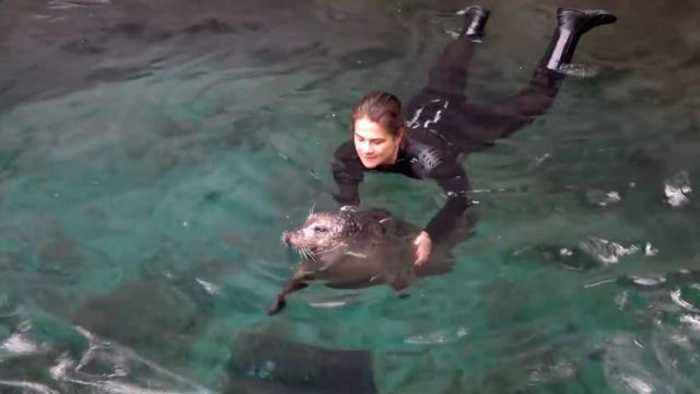 This Calming Video Shows Elderly Seal Getting Swim Therapy