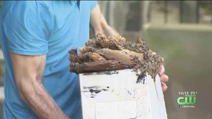 50,000 Honeybees Found In Apartment Building In New Jersey