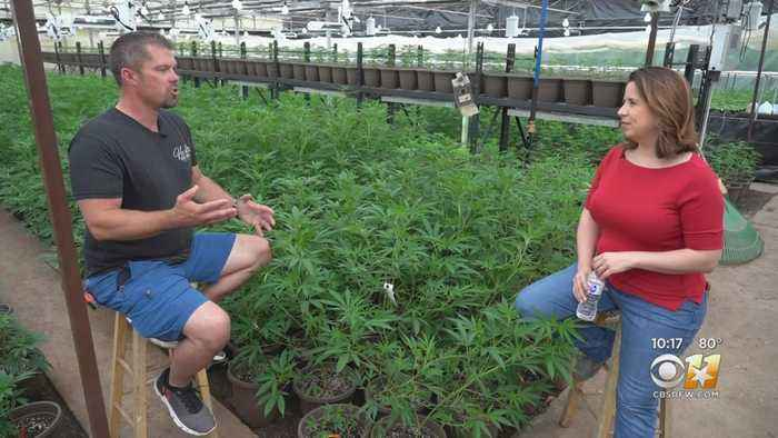 Hemp Grower From Oklahoma Says Texas Will Benefit From Legalizing The Plant