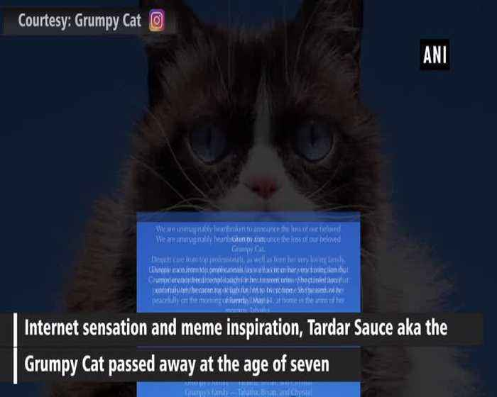 It's a grumpy day, Internet's favourite Grumpy Cat is no more