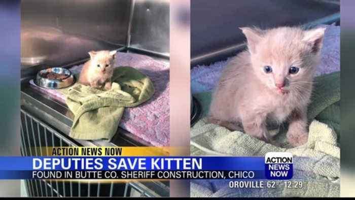 Butte County Sheriff's Office saved kitten lost in building construction