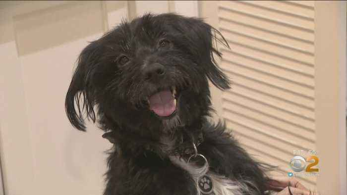 Dog Saves Himself, Alerts FDNY About Apartment Fire