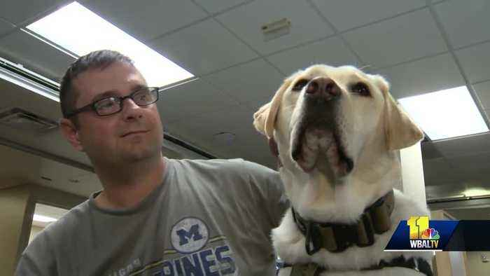 Facility dogs help service members during rehabilitation at Walter Reed