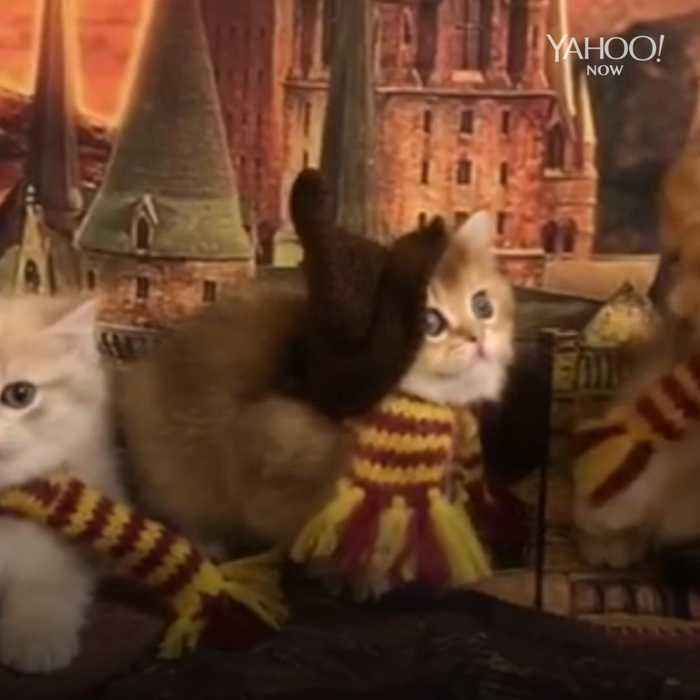Harry Paw-ter kittens are adorable