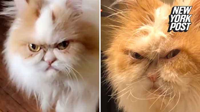 Is this the world's next 'Grumpy Cat'?