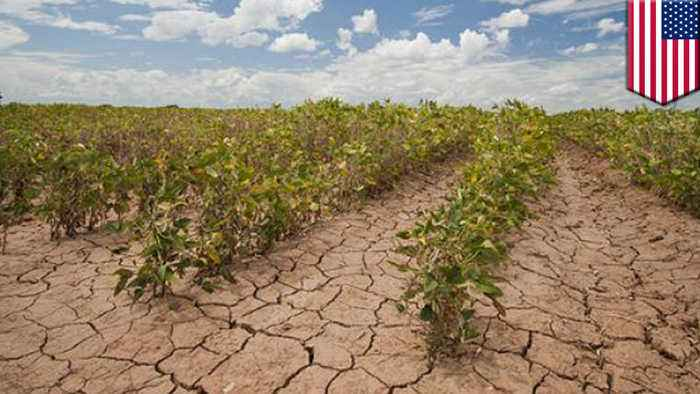 Global food production is already being affected by climate change