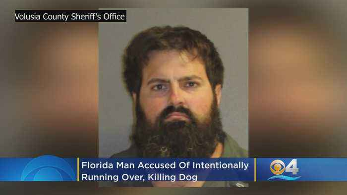 Florida Man Accused Of Intentionally Running Over, Killing Dog