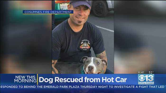 Cosumnes River Firefighters Rescue Dog From Hot Car