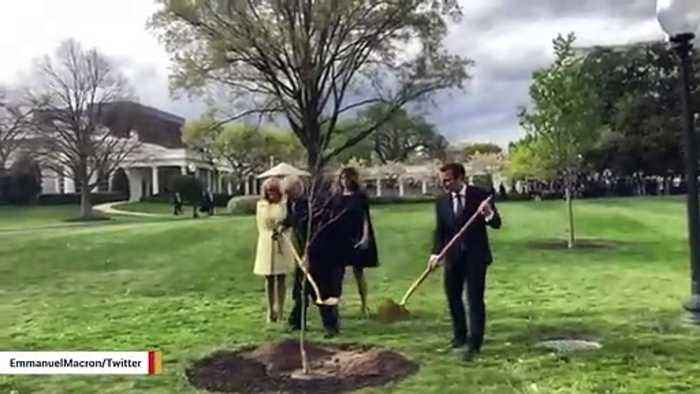 Tree Planted By Trump And Macron Has Reportedly Died