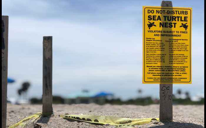 Beach chairs causing problems for nesting sea turtles on local beaches