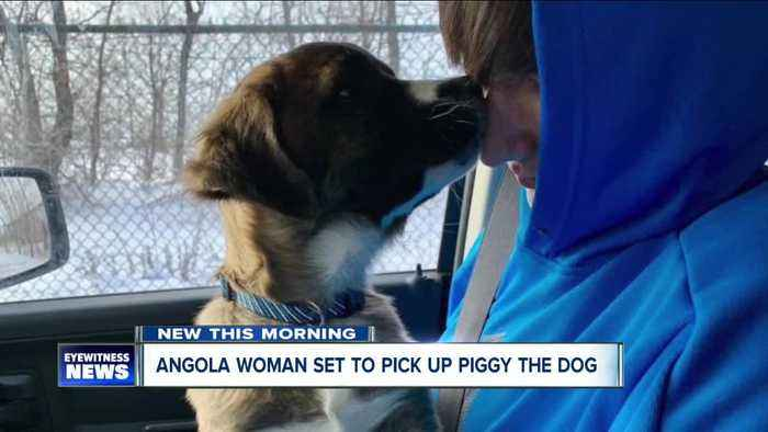 Angola woman set to pick up abused war pup from Buffalo airport Monday