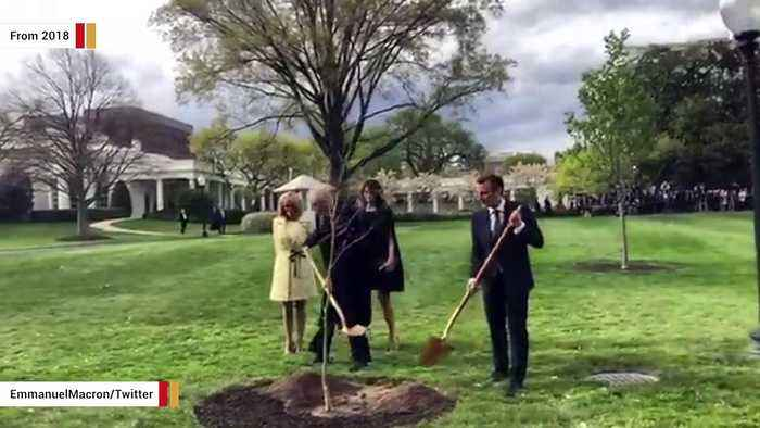 Macron Says He'll Send New Tree To Trump After Reported Demise Of 2018 Tree