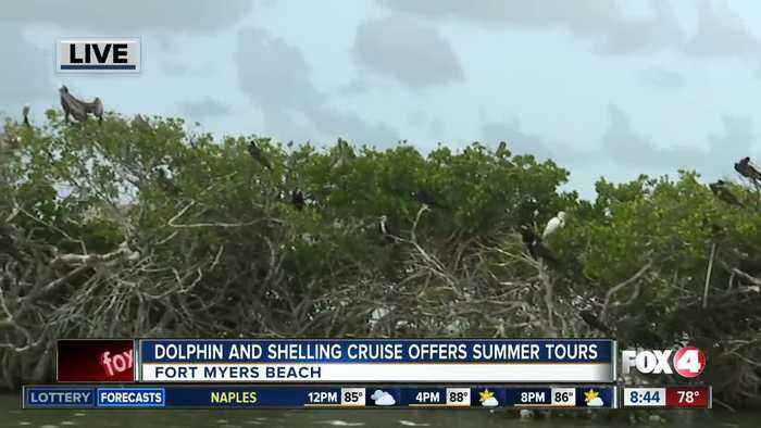 Island Time Dolphin and Shelling Cruises run private tours