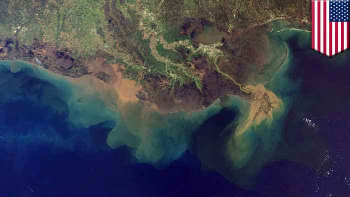 Gulf of Mexico's 'dead zone' may be largest in history