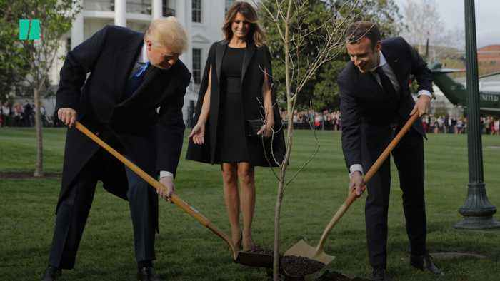 """New """"Friendship Tree"""" Coming To The U.S."""