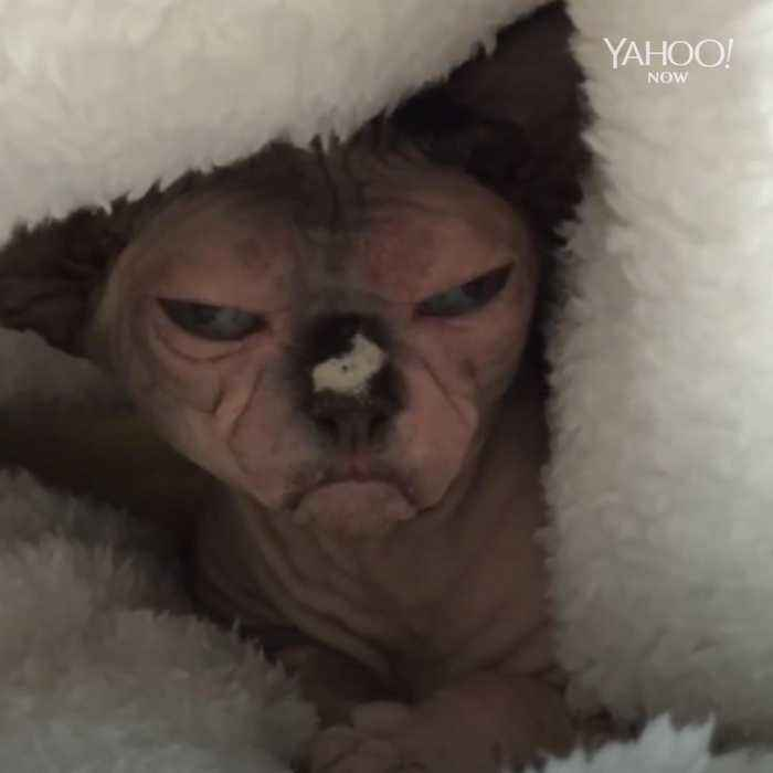 Hilarious cat can't help but look grumpy at all times
