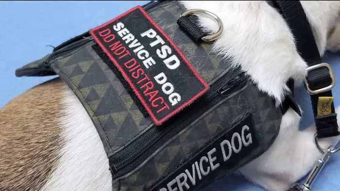 After Pushback, Utah Restaurant Owner Will Allow Service Animals with a Signature