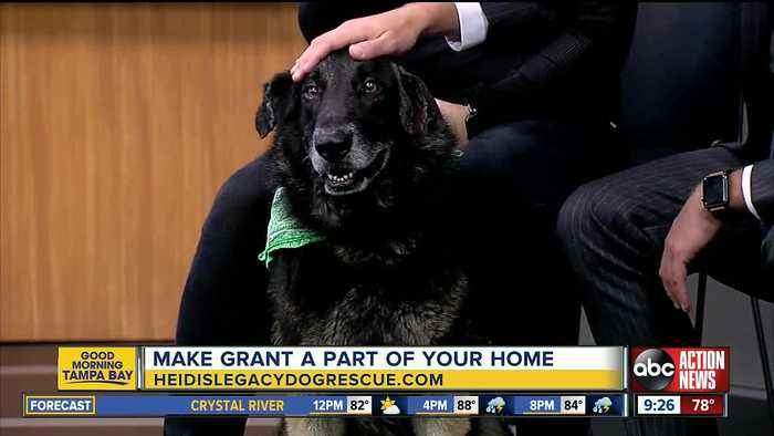 Rescues in Action June 15 | Grant needs forever home