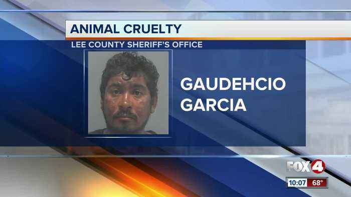 Man accused of kicking his dog in Fort Myers